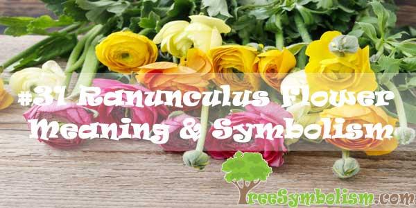 #31 Ranunculus Flower : Meaning & Symbolism