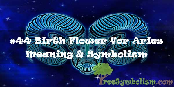 #44 Birth Flower for Aries - Meaning & Symbolism