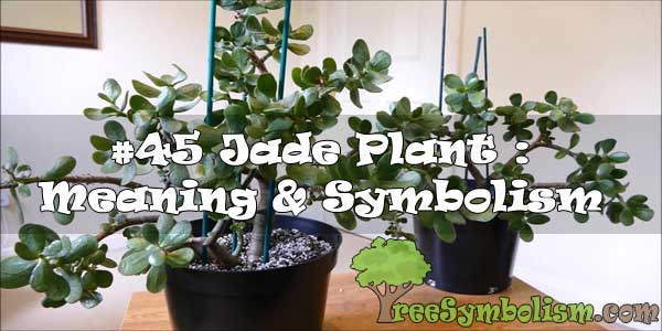 #45 Jade Plant : Meaning & Symbolism