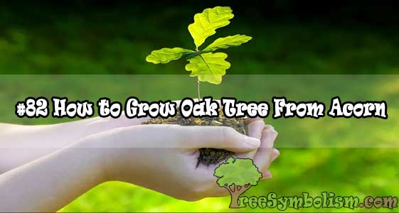 #82 How to Grow Oak Tree From Acorn