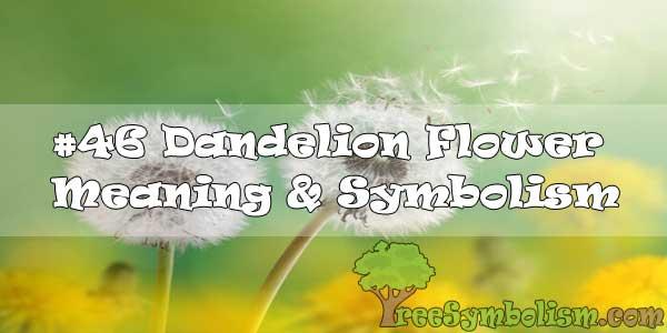 #46 Dandelion Flower : Meaning & Symbolism