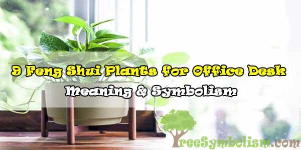 9 Feng Shui Plants for Office Desk - Meaning & Symbolism