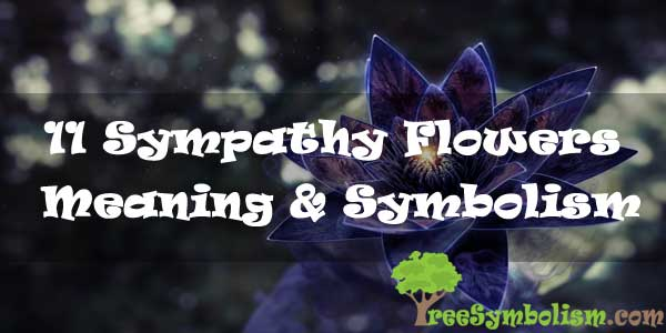 11 Sympathy Flowers : Meaning & Symbolism