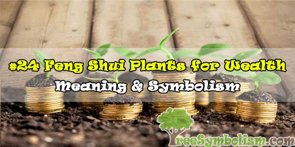 #24 Feng Shui Plants for Wealth - Meaning & Symbolism