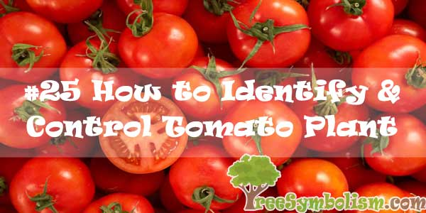 #25 How to Identify & Control Tomato Plant Disease