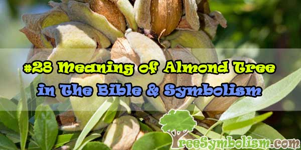 #28 Meaning of Almond Tree in The Bible & Symbolism