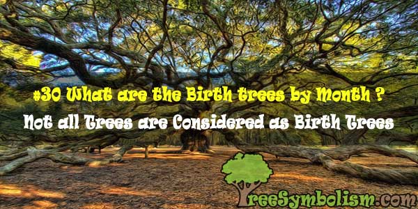 #30 What are the Birth trees by Month