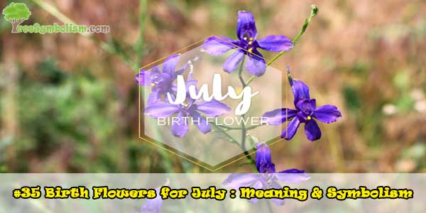 #35 Birth Flowers for July : Meaning & Symbolism