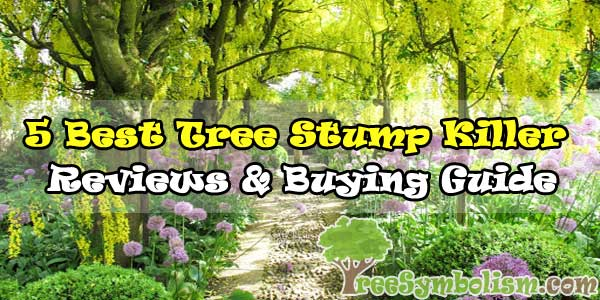 🥇5 Best Tree Stump Killer - Reviews & Buying Guide