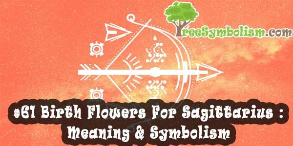 #61 Birth Flowers For Sagittarius : Meaning & Symbolism