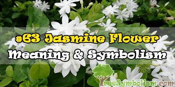 #63 Jasmine Flower : Meaning & Symbolism