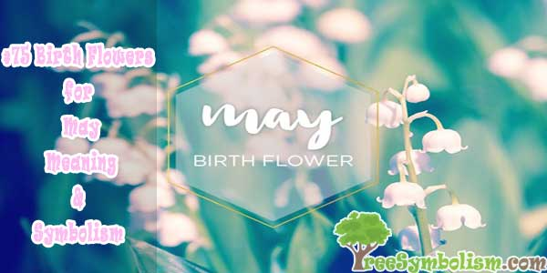#75 Birth Flowers for May - Meaning & Symbolism