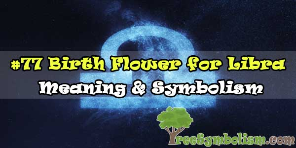 #77 Birth Flower for Libra - Meaning & Symbolism