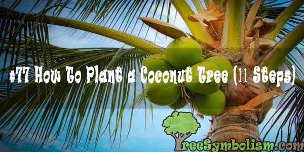 #77 How To Plant a Coconut Tree (11 Steps)