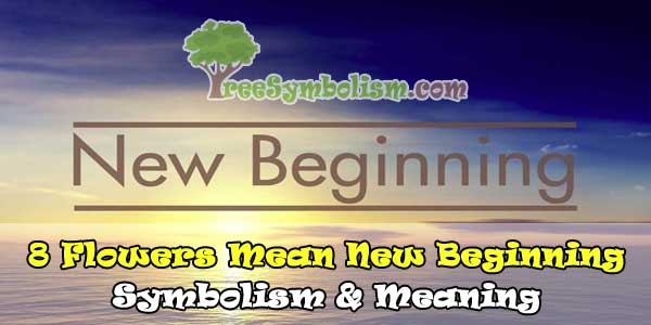 🌷8 Flowers Mean New Beginning - Symbolism & Meaning