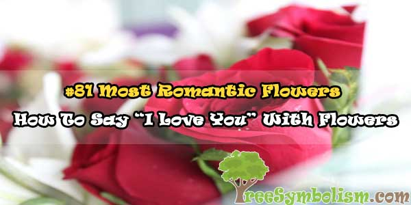 """#81 Most Romantic Flowers - How To Say """"I Love You� With Flowers"""