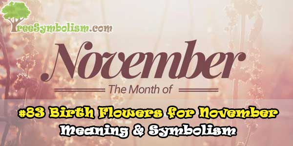 #83 Birth Flowers for November - Meaning & Symbolism