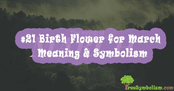 #21 Birth Flower for March , Meaning & Symbolism