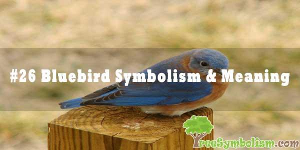 #26 Bluebird Symbolism & Meaning