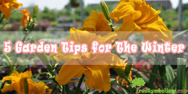 5 Garden Tips for The Winter