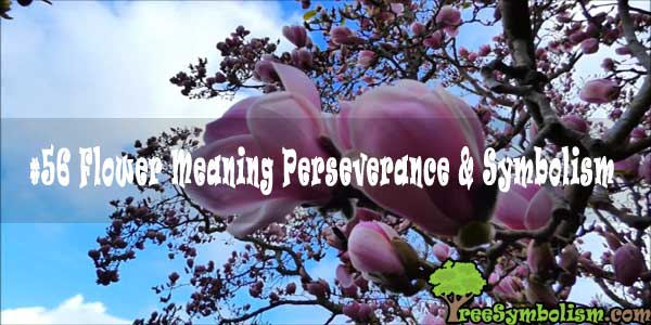#56 Flower Meaning Perseverance & Symbolism