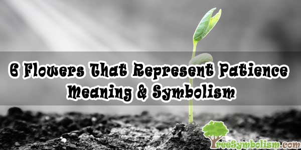 6 Flowers That Represent Patience - Meaning & Symbolism