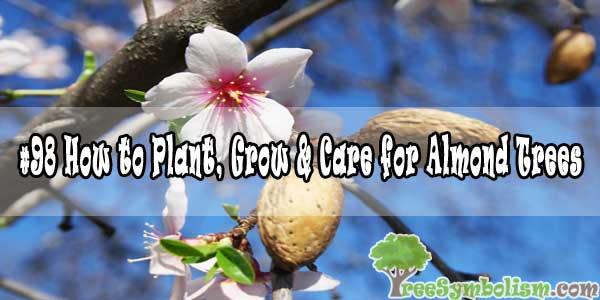 #98 How to Plant, Grow & Care for Almond Trees