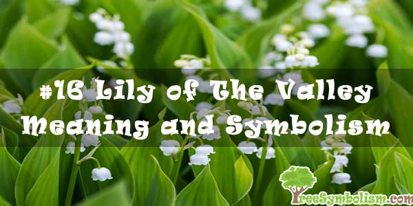 #16 Lily of The Valley - Meaning and Symbolism