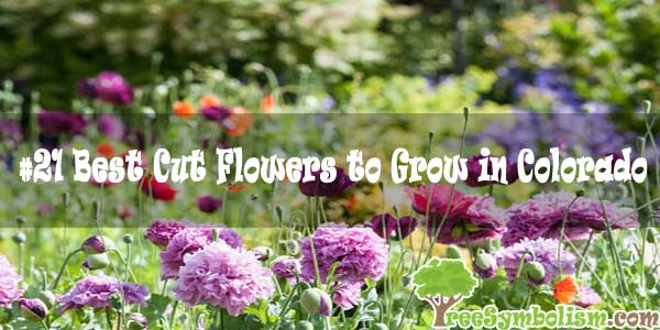 #21 Best Cut Flowers to Grow in Colorado