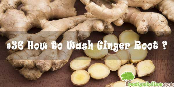 #36 How to Wash Ginger Root ?