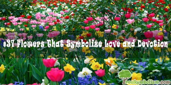 #37 Flowers That Symbolize Love and Devotion