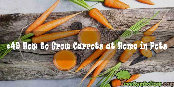 #49 How to Grow Carrots at Home in Pots