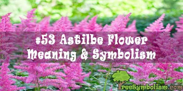 #53 Astilbe Flower : Meaning & Symbolism