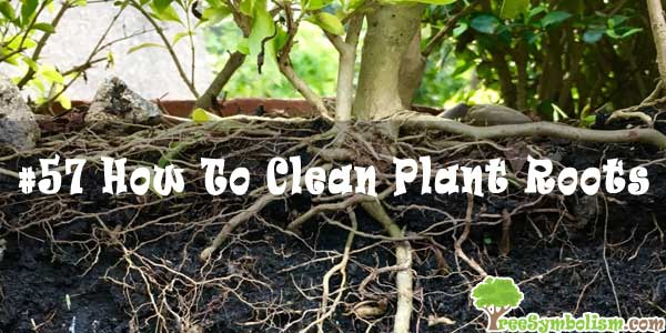 #57 How To Clean Plant Roots
