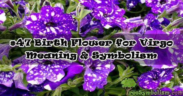 #47 Birth Flower for Virgo - Meaning & Symbolism