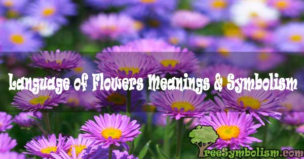#19 Language of Flowers Meanings & Symbolism