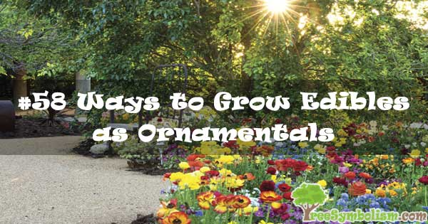 #58 Ways to Grow Edibles as Ornamentals