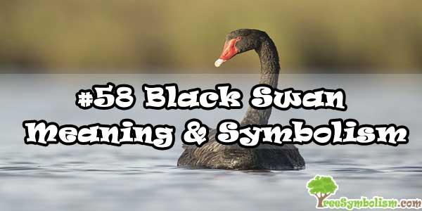 #58 Black Swan - Meaning & Symbolism