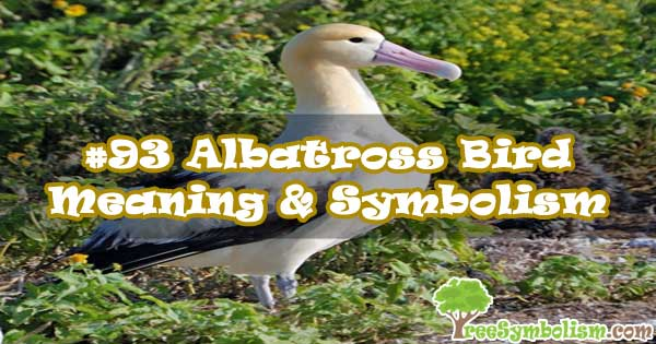 #93 Albatross Bird - Meaning & Symbolism