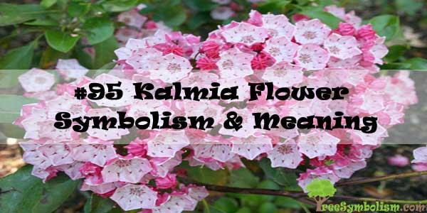 #95 Kalmia Flower - Symbolism & Meaning