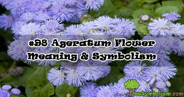 #98 Ageratum Flower - Meaning & Symbolism