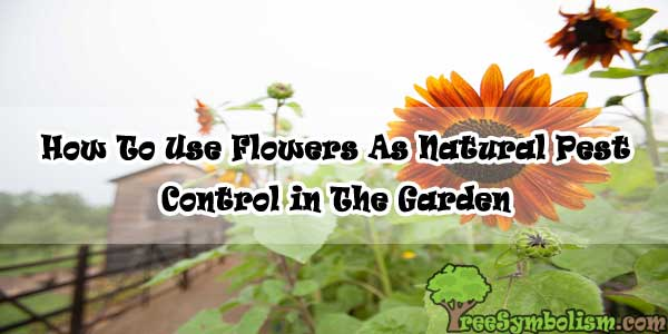 How To Use Flowers As Natural Pest Control in The Garden