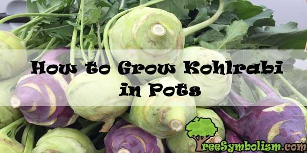 How to Grow Kohlrabi in Pots