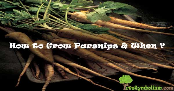 How to Grow Parsnips & When ? [2020]