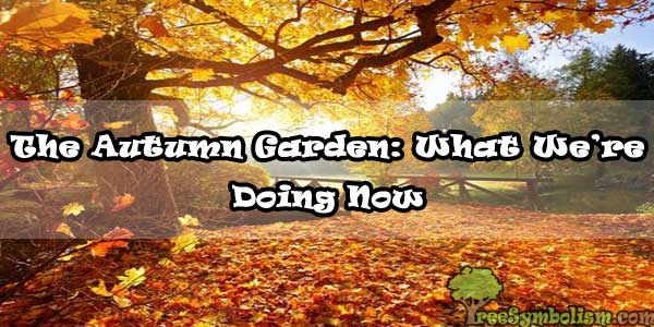 The Autumn Garden: What We're Doing Now