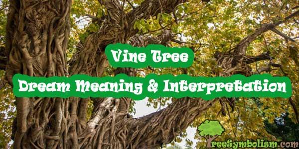 Vine Tree - Dream Meaning & Interpretation