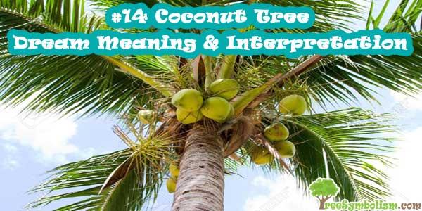 #14 Coconut Tree - Dream Meaning & Interpretation