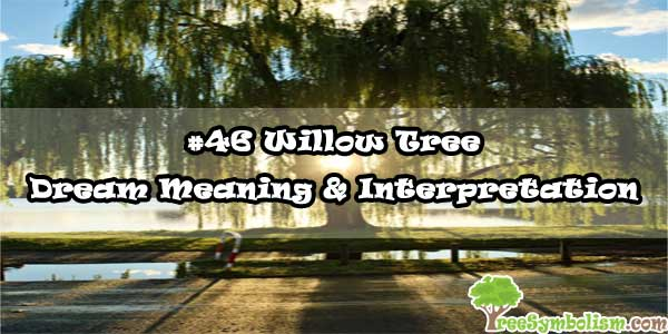 #46 Willow Tree - Dream Meaning & Interpretation