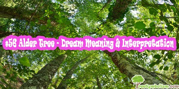 #56 Alder Tree - Dream Meaning & Interpretation