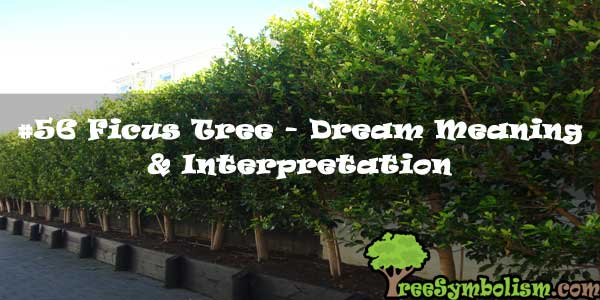 #56 Ficus Tree - Dream Meaning & Interpretation